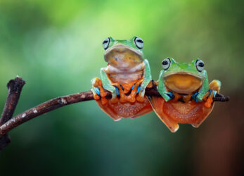 frog-gifts