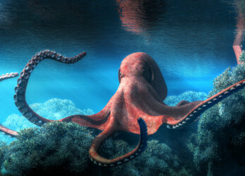 octopus-gifts