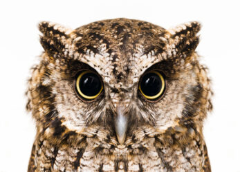 owl-gifts